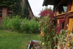 Impressionen vom Hof in Tarmitz4 / Wendland Bild 19