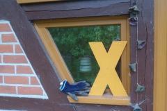 Impressionen vom Hof in Tarmitz4 / Wendland Bild 5